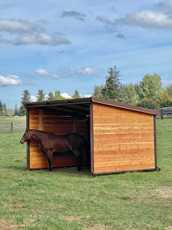 10x12 with horse