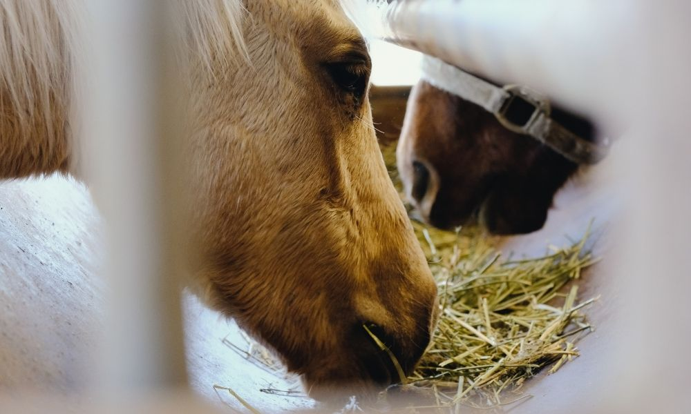 4 Types of Hay Feeders & Choosing the Right One