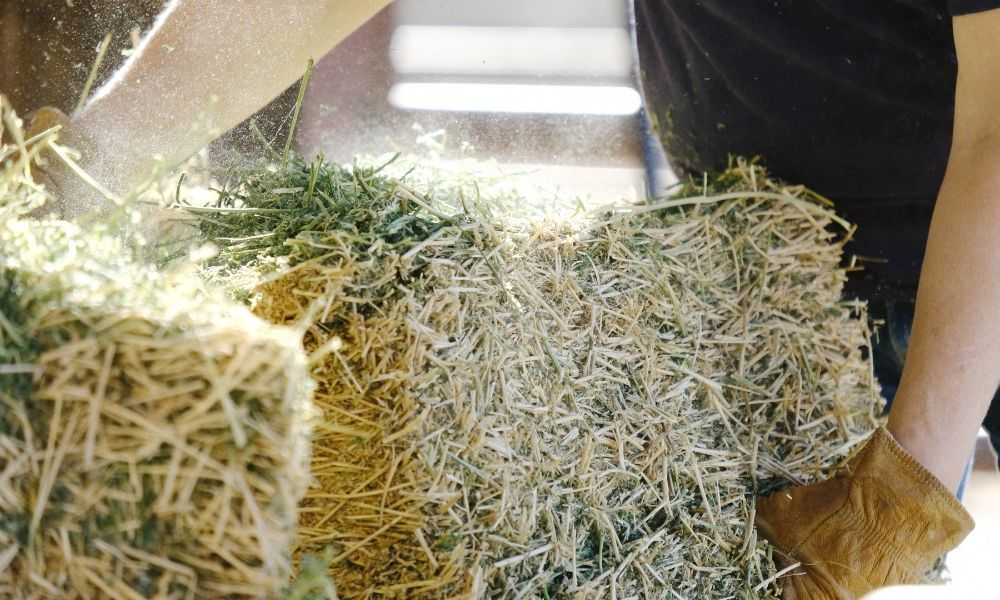 3 Tips for Storing Hay Properly To Make It Last